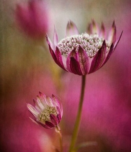 breathe-life-pink-flowers