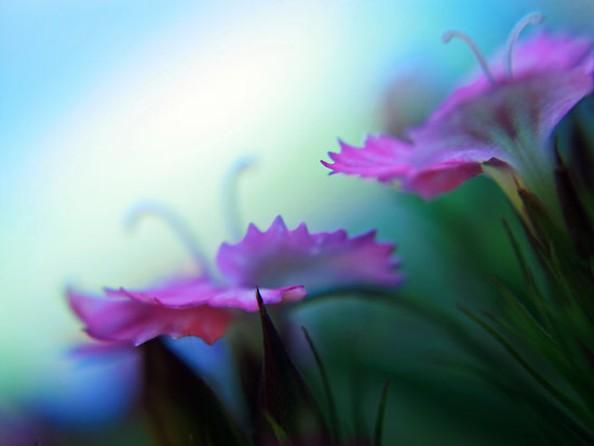 sweet-spontaneous-violet