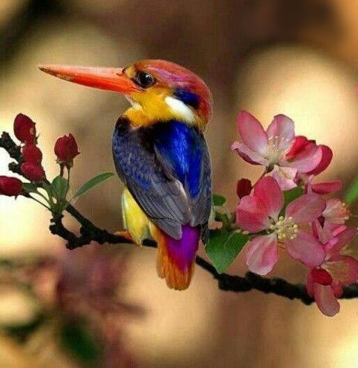colored-bird-on-tree-branch