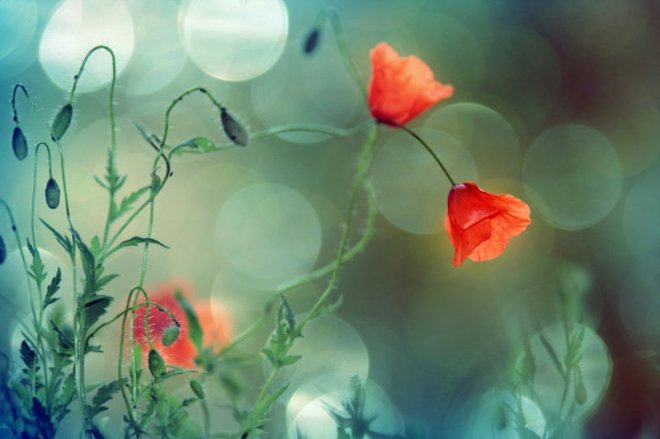 flowers-in-my-heaven-by-rezzan