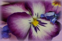 flowers-purple-yellow-blue